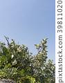 植物 植物学 植物的 39811020