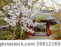 樱花 樱桃树 春天 39812169
