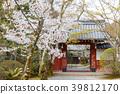 樱花 樱桃树 春天 39812170
