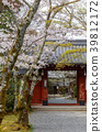 樱花 樱桃树 春天 39812172