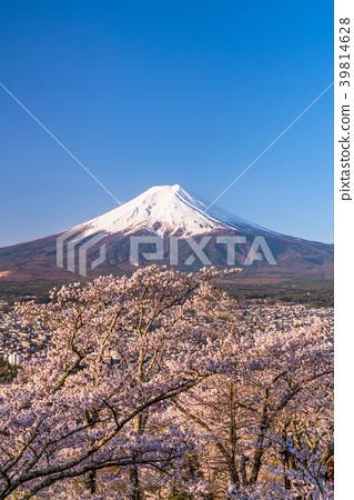 富士山 櫻花 櫻 39814628