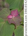 植物 植物学 植物的 39816542