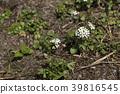 自然 植物 植物学 39816545