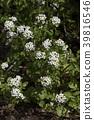 自然 植物 植物学 39816546