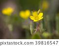 花朵 花卉 花 39816547