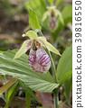 植物 植物学 植物的 39816550