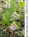 植物 植物学 植物的 39816551