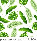 palm coconut monstera 39817657