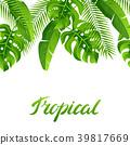 tropical palm coconut 39817669