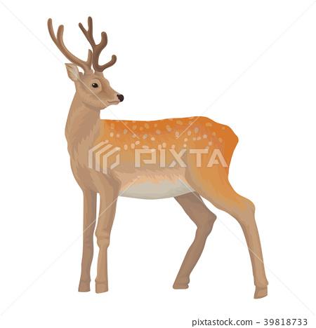 Deer wild northern forest animal vector 39818733
