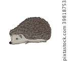 Cute hedgehog wild forest animal vector 39818753