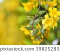jasmine, jessamine, gelsemium 39825283