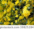 jasmine, jessamine, gelsemium 39825284