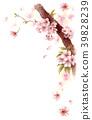 櫻花 櫻 賞櫻 39828239