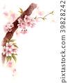 櫻花 櫻 賞櫻 39828242