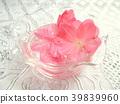 春天 春 花朵 39839960