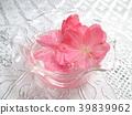 春天 春 花朵 39839962