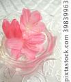春天 春 花朵 39839963