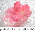 春天 春 花朵 39839965