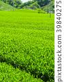 新鮮的綠茶種植園 39840275