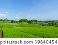 綠茶種植園藍天 39840454