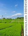 綠茶種植園藍天 39840459