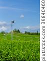 綠茶種植園藍天 39840460