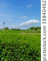 綠茶種植園藍天 39840462