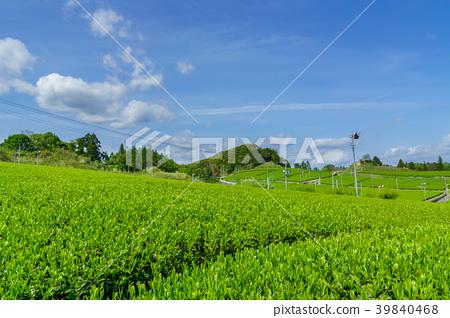 綠茶種植園藍天 39840468