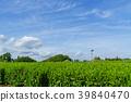 綠茶種植園藍天 39840470