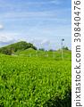 綠茶種植園藍天 39840476