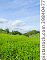 綠茶種植園藍天 39840477
