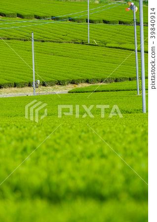 新鮮的綠茶種植園 39840914