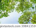 신록의 나무 에코 이미지 39841359