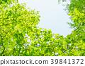 신록, 잎, 이파리 39841372