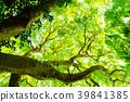 신록의 나무 에코 이미지 39841385