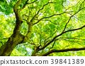 tender, green, verdure 39841389