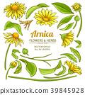 flower, plant, vector 39845928
