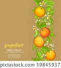 grapefruit vector pattern  39845937