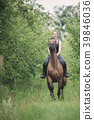 Young woman ridding on a horse 39846036
