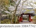 花茎 日本 旅游业 39847742