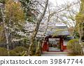 樱花 樱桃树 春天 39847744