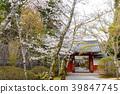 樱花 樱桃树 春天 39847745