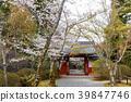 樱花 樱桃树 春天 39847746