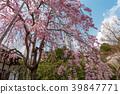 花茎 日本 旅游业 39847771