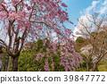 花茎 日本 旅游业 39847772
