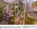 花茎 日本 旅游业 39847773