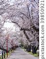 福島縣郡山市民休閒區一百個公園的熱門景點。盛開的櫻花隧道,您可以享受春天的歡樂 39850921