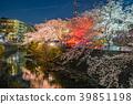 【카나가와 현】 벚꽃 39851198