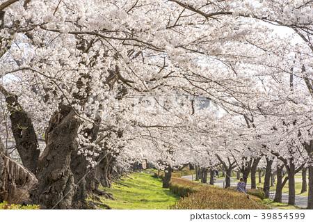 Kaisei Sankoen Park Japan S Oldest Grade Somei Stock Photo 39854599 Pixta